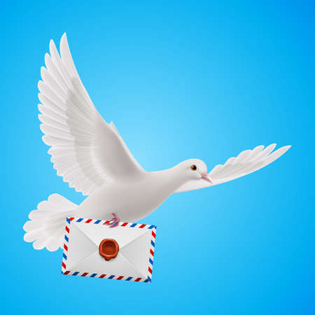 white pigeon: Pigeon fly with mail in blue sky