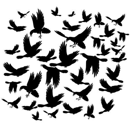 blackbird: Many black crows flying on the white background Illustration