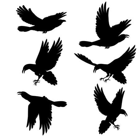 Set. Black crows flying on the white background Vector