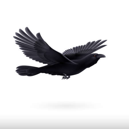 back lit: Black crow precipitously flying on the white background Illustration