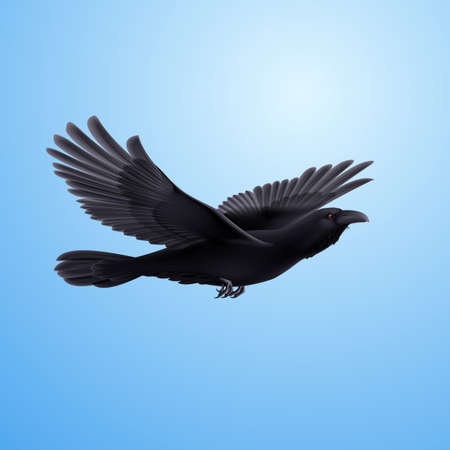 Black crow precipitously flying on the blue background Vector