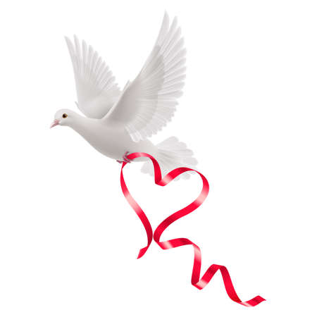 Dove with red ribbon in the white background Illustration