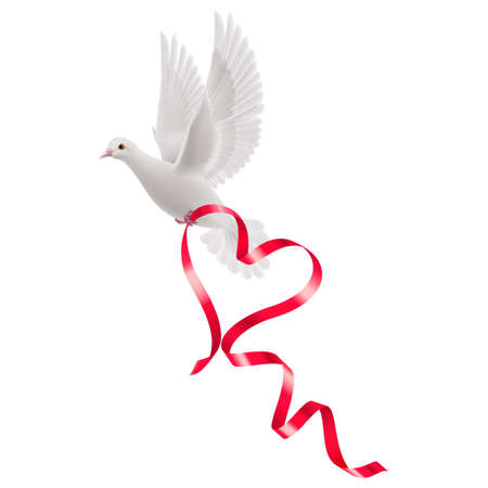 Dove with red ribbon in the white background.  Illustration