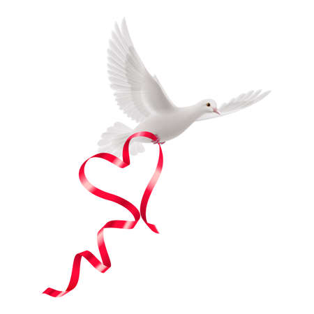 White dove with red ribbon on the white background. Vector
