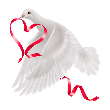 Dove with red ribbon on the white background. Vector
