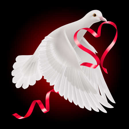White dove with red ribbon on the dark background. Vector