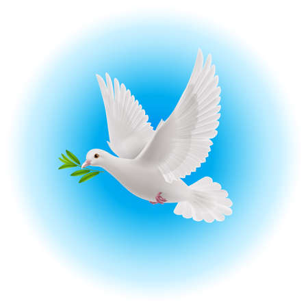 beak: White dove flying with green twig in its beak in blue sky