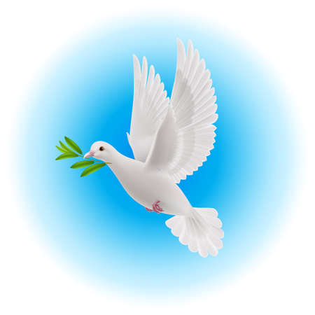 a twig: White dove flying with olive twig in its beak in blue sky