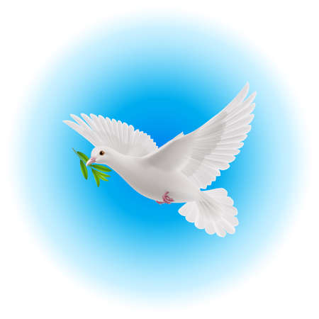 White dove flying with green branch in its beak in blue sky