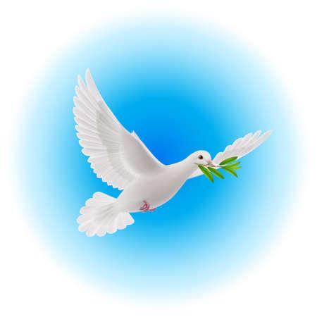 beak: White dove flying with olive branch in its beak in blue sky