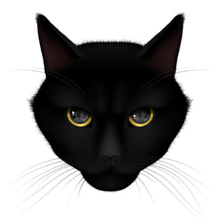 watchful: Head of black cat isolated on a white background Illustration