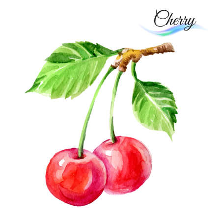 Cherry drawing watercolor isolated on white background