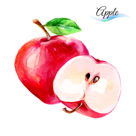 Apple drawing watercolor isolated on white background Illustration