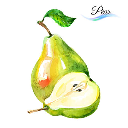 Watercolor fruit pears isolated on white background  イラスト・ベクター素材
