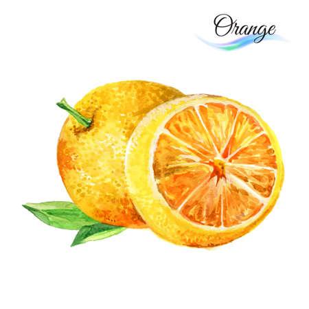 Watercolor fruit orange isolated on white background