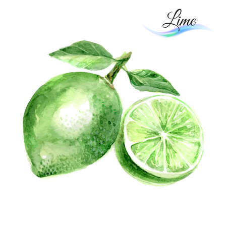 lime juice: Watercolor fruit lime isolated on white background