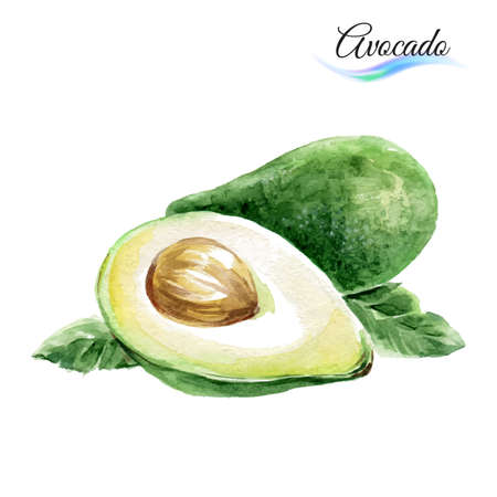 Watercolor fruit avocado isolated on white background Çizim