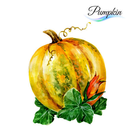 harvest: Watercolor vegetables pumpkin isolated on white background Illustration