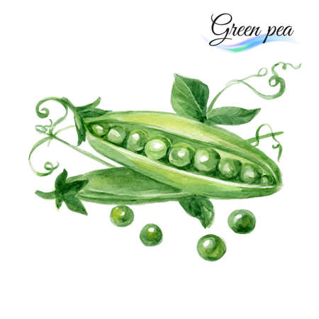 pea pod: Watercolor vegetables green pea isolated on white background