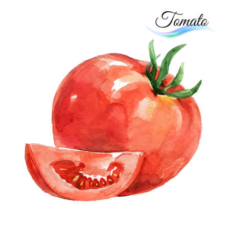 Watercolor vegetables tomato isolated on white background