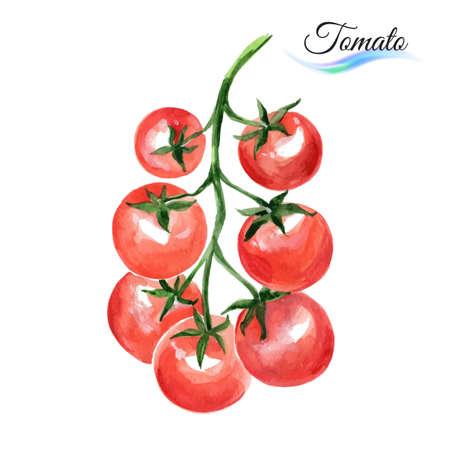 Aquarel groenten rode tomaat op een witte achtergrond