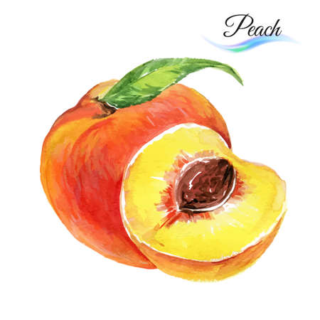 Watercolor fruit peach isolated on white background Çizim