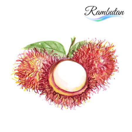 rambutan: Fresh fruit rambutan isolated on white background