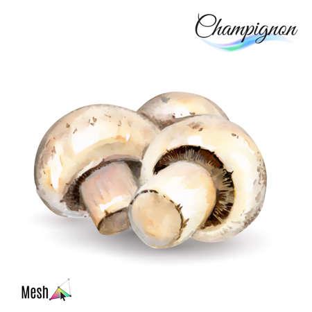 champignon: Watercolor champignon plant isolated in white background