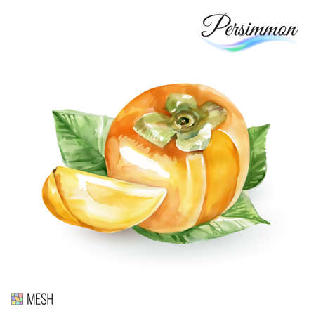 persimmon: Hand-Drawn Watercolor Painting Persimmon on White Background