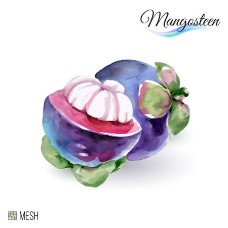 mangosteen: Hand-Drawn Watercolor Painting Mangosteen Fruit on White