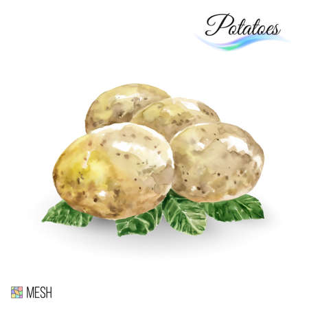 Watercolor Potato on White Background. Cute illustration is good for magazine or book, poster and card design Illustration