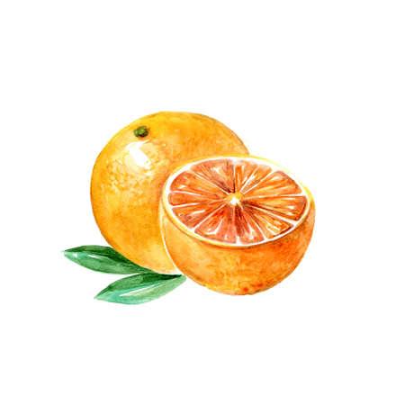 Watercolor Grapefruit. Hand Drawn Illustration Organic Food Vegetarian Ingredient Stock Photo