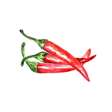 Watercolor Hot Chili Pepper. Hand Drawn Illustration Organic Food Vegetarian Ingredient Stock Photo