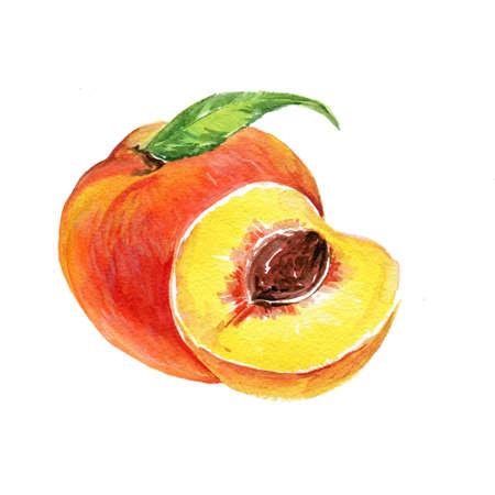 Watercolor Apricot. Hand Drawn Illustration Organic Food Vegetarian Ingredient Stock Photo