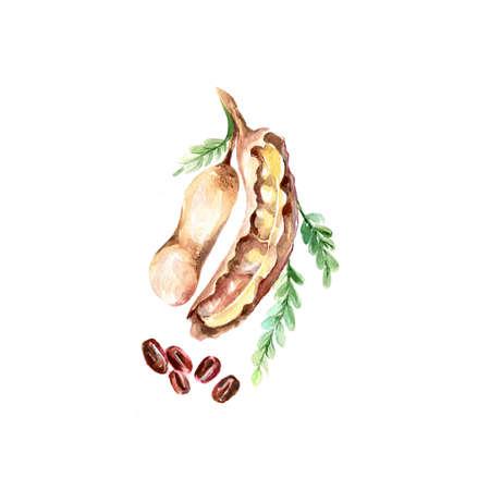 Waterverf Tamarind. Hand getekende illustratie Organisch voedsel Vegetarische ingrediënt Stockfoto