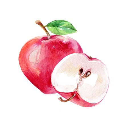 水彩のアップル。手描きイラスト有機食品ベジタリアン成分 写真素材
