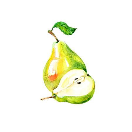 水彩の新鮮な梨。手描きイラスト有機食品ベジタリアン成分