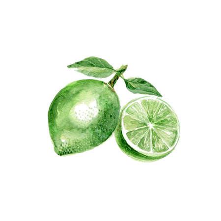 Watercolor Lime. Hand Drawn Illustration Organic Food Vegetarian Ingredient Stock Photo