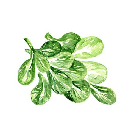 수채화 옥수수 양상추입니다. 손으로 그린 그림 유기농 음식 채식주의 성분