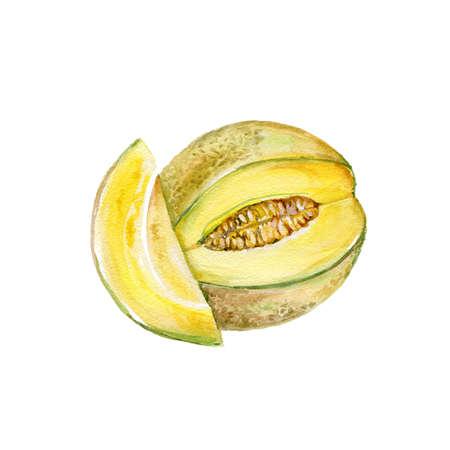 Watercolor Melon. Hand Drawn Illustration Organic Food Vegetarian Ingredient