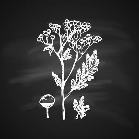 The white silhouette of the tanacetum painted a gel pen on black background