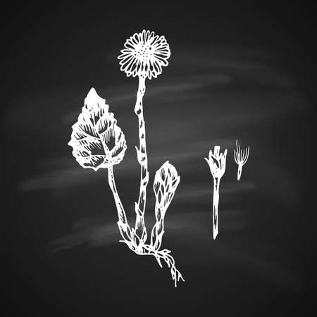 The white silhouette of the tussilago painted a gel pen on black background