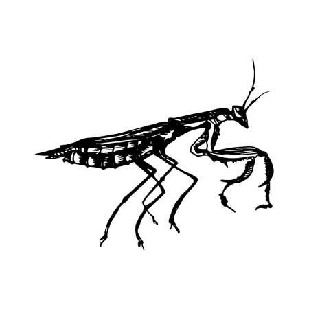 Black style icon of Mantis.