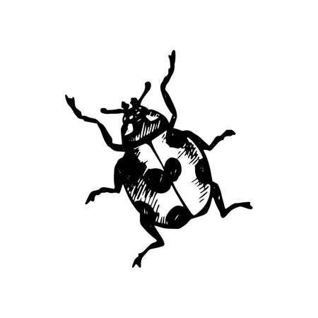 Cute Coccinellidae on white illustration painted with black gel pen.