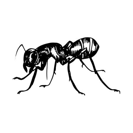 Illustration of a black silhouette ant on white illustration painted with black gel pen.