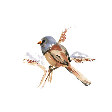 Fringilla coelebs Lat. Common Chaffinch. Watercolor Small Tit Bird on a Tree Branch. Hand Drawn Illustration on White Background