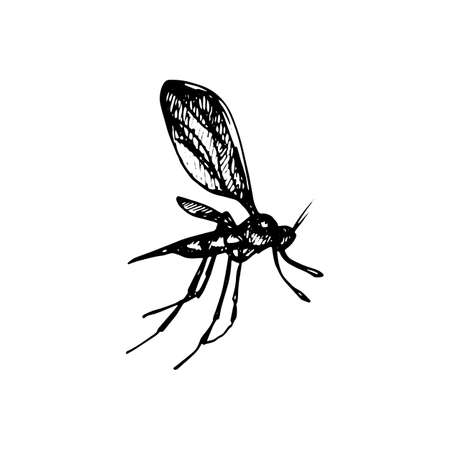Black silhouette of the mosquito on white background