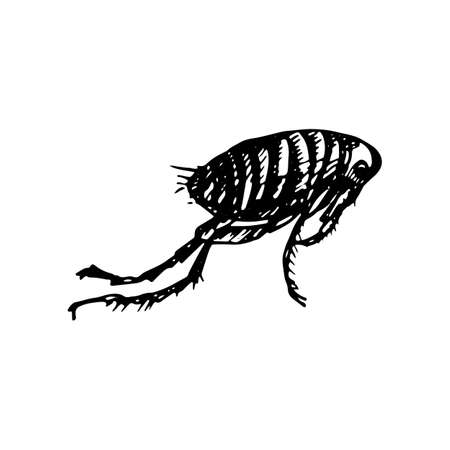 The black silhouette of a human flea painted a black gel pen on white background Ilustração