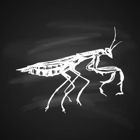 White style icon of Mantis. Mantis painted white a gel pen on black background