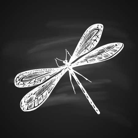 Libélulas blancas lat. Odonata sobre fondo negro pintado una pluma de gel. Foto de archivo - 94058743